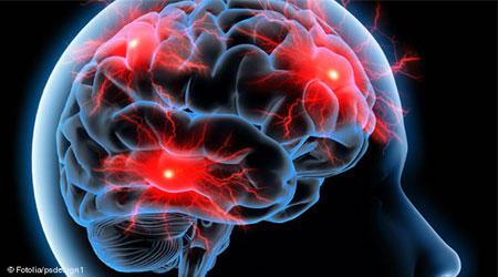 بناء دماغ الإنسان عاماً لبناء دماغ الانسان